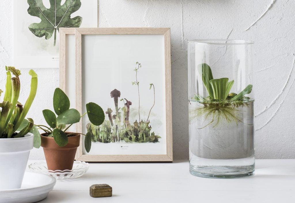 Waterplantje in glazen vaas