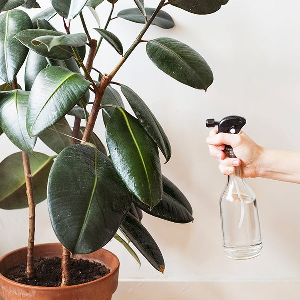 Kamerplant sproeien