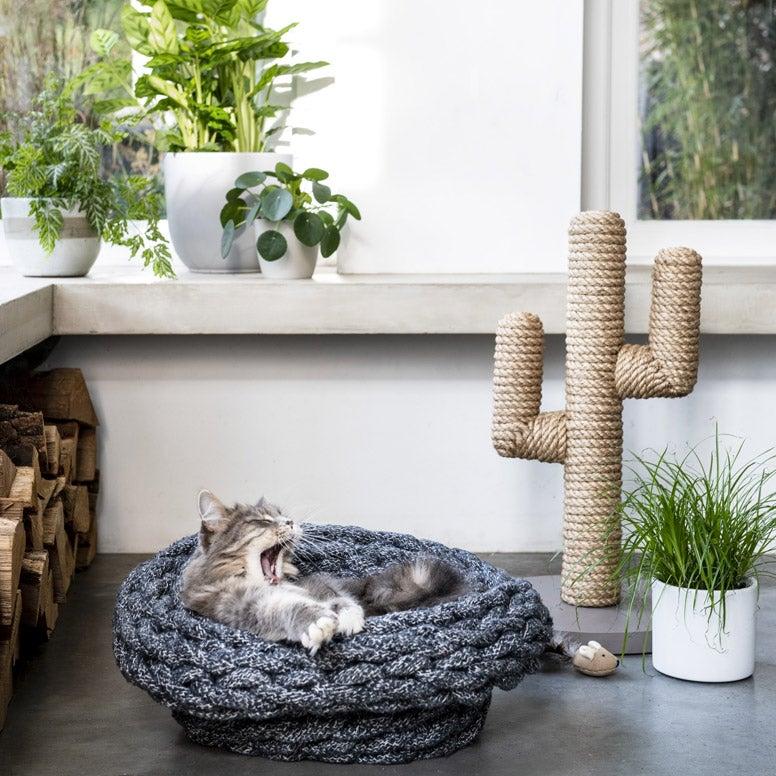 Kat in mand bij cactus krabpaal