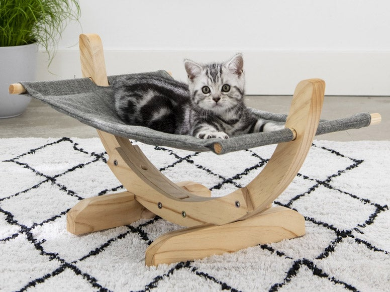 Kitten in kattenhangmat