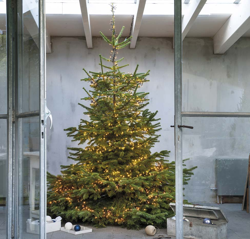 Grote kerstboom buiten met verlichting