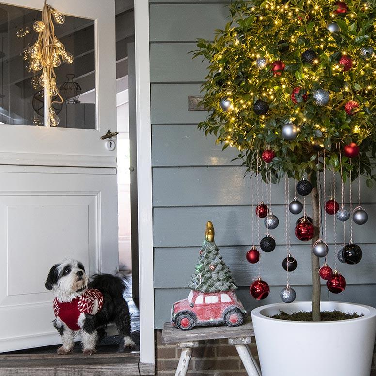 Hond en kerstboom