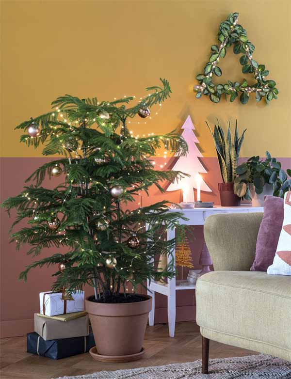 Kamerden als kerstboom