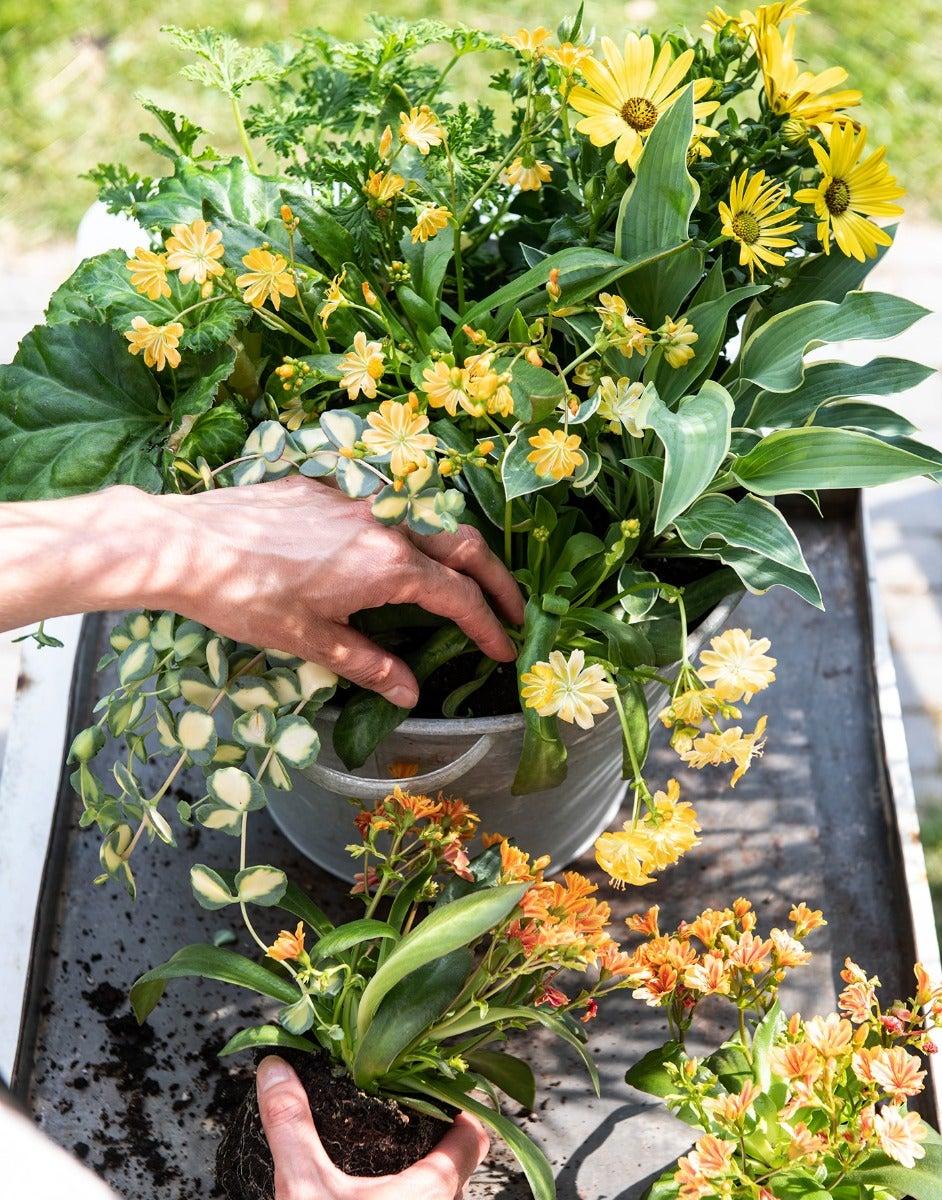 Gele zomerbloeiers voor balkon of terras