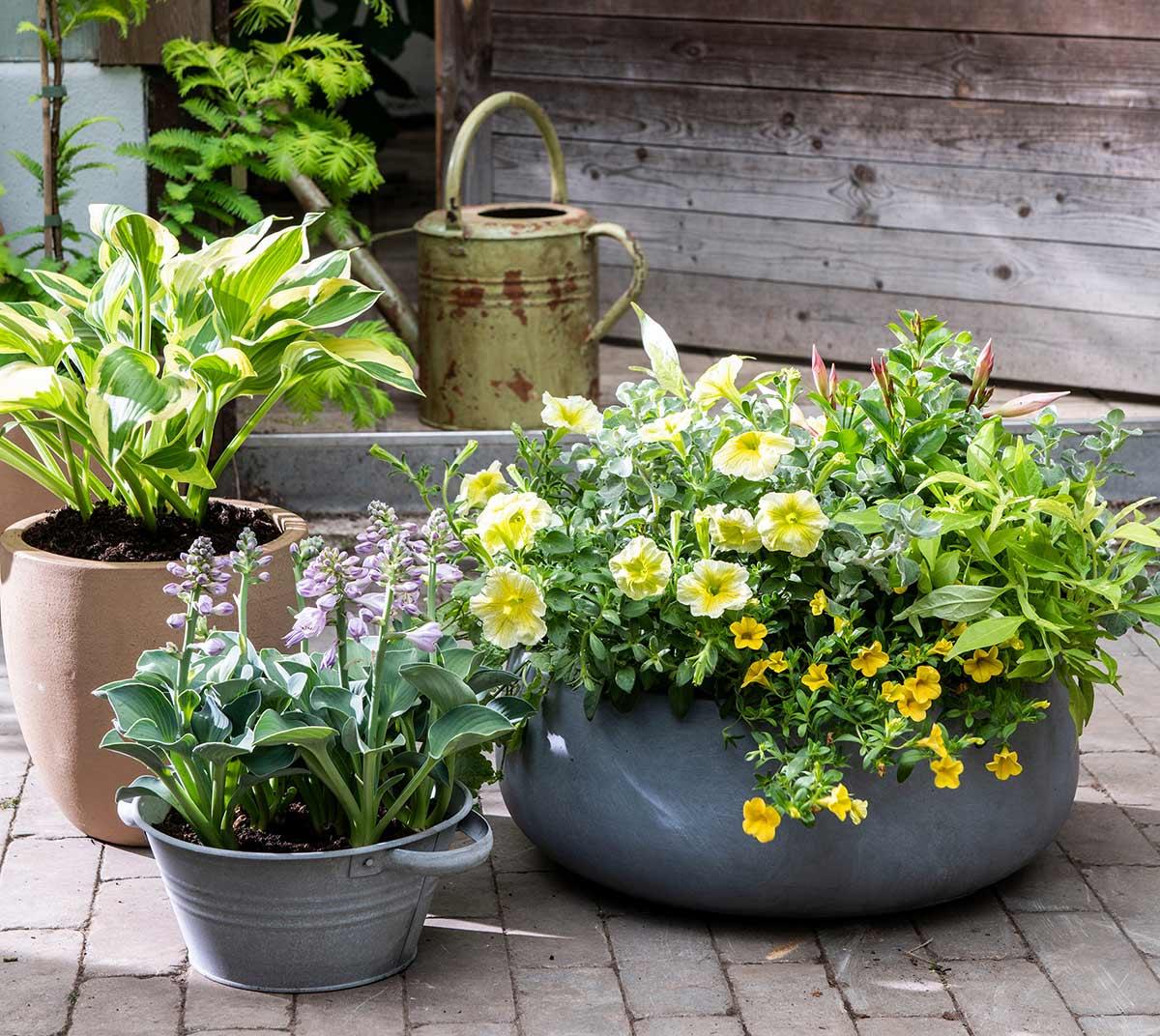 Gele planten voor balkon in bloempot