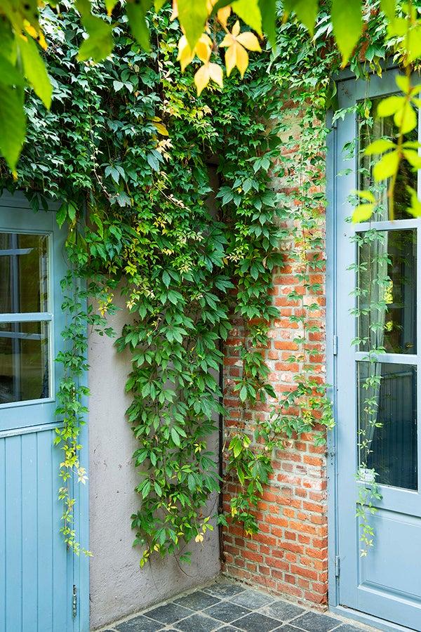Klimplanten aanplanten in het najaar
