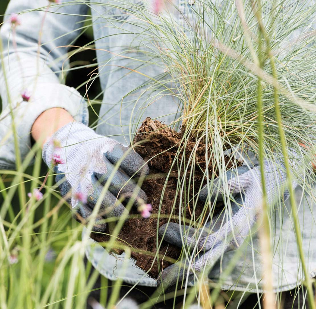 Siergrassen aanplanten