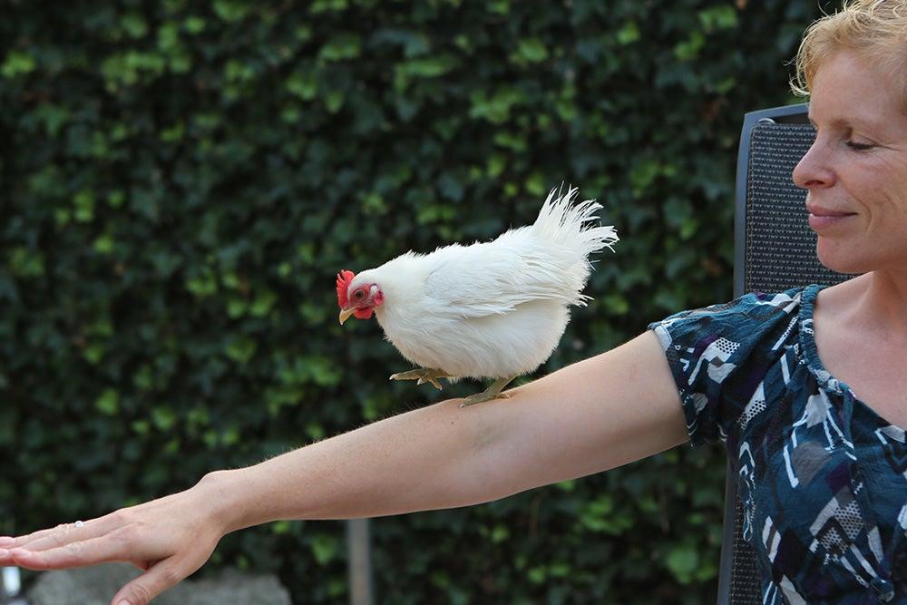 Kip op arm laten lopen