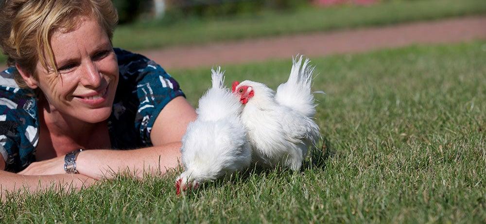 2 Witte kippen