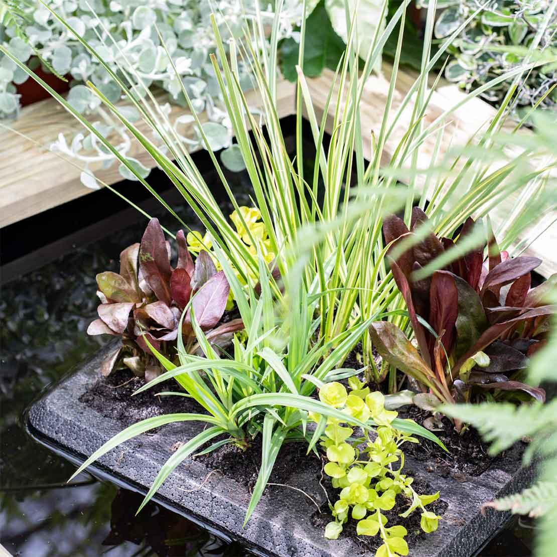 Vijver met drijfplantjes