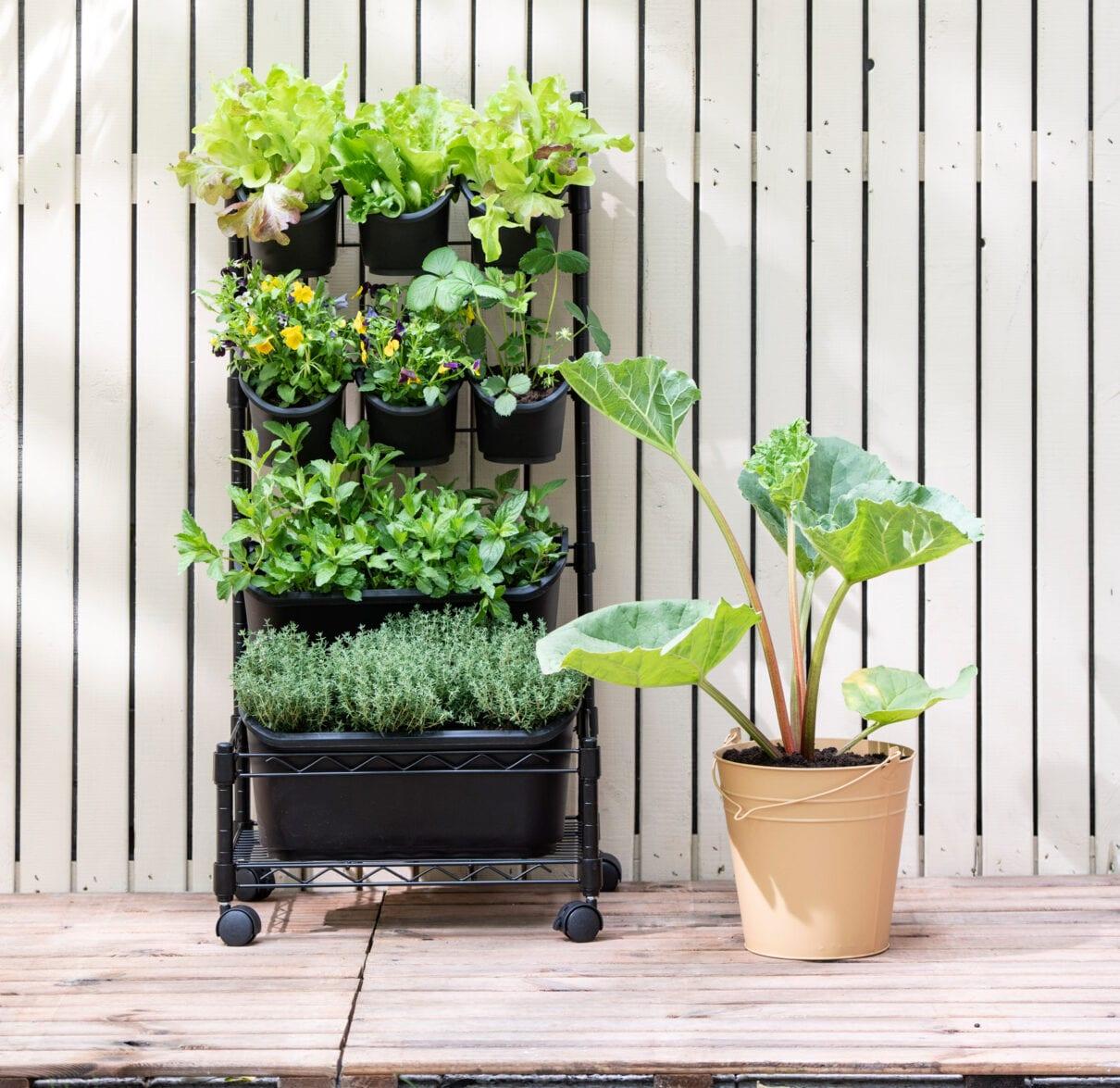 Verticale tuin in verrijdbare plantenbak