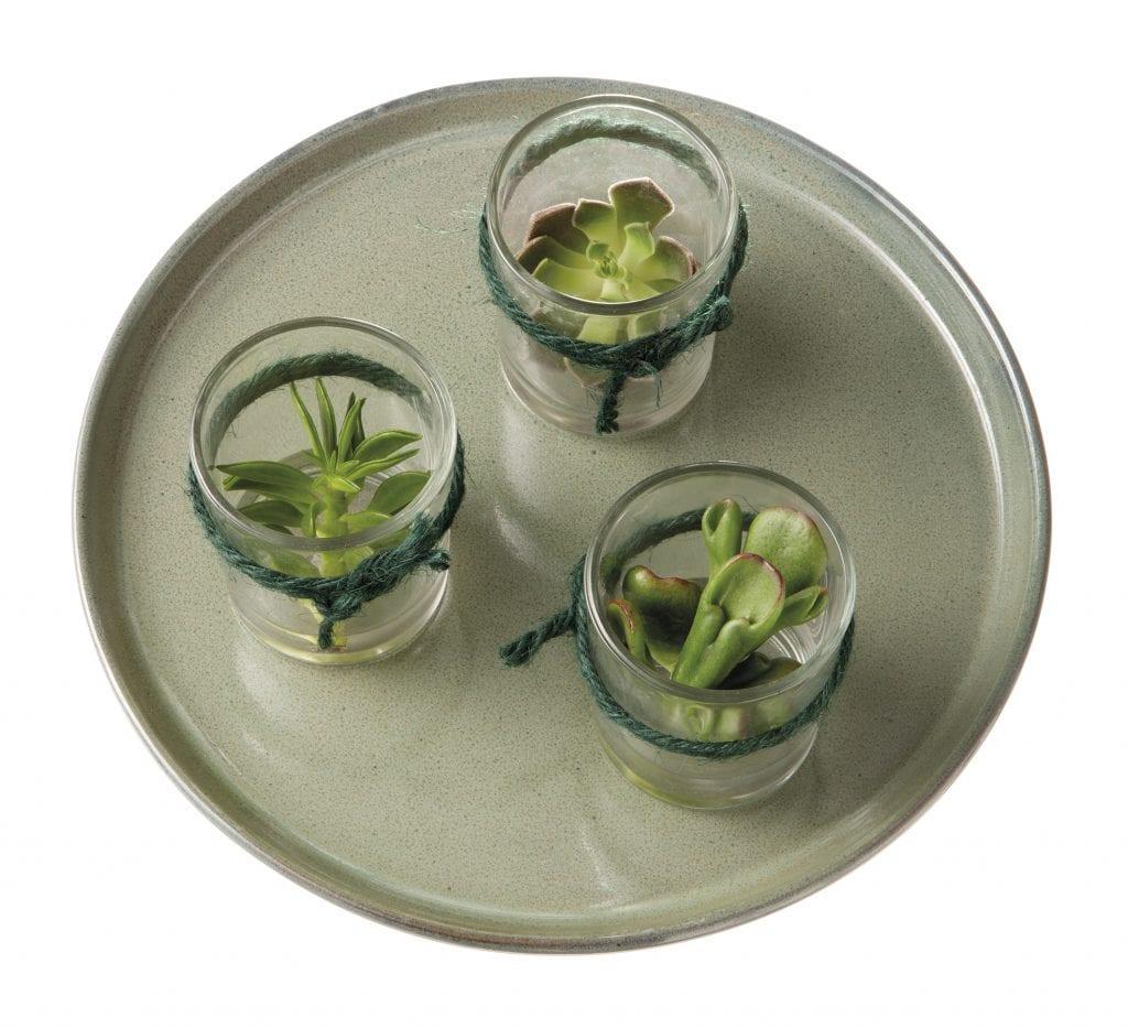 Vetplant stekjes in glas