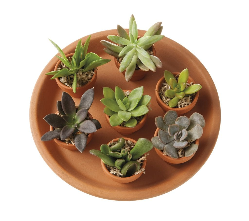 Vetplant stekjes in terracotta