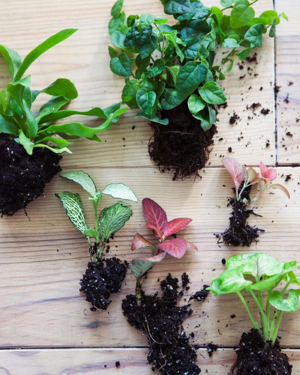Plantjes voor terrarium