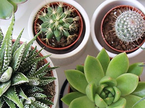 Cactussen en vetplanten