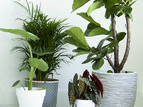 Groene kamerplanten