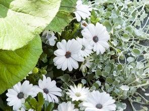 Vaste planten