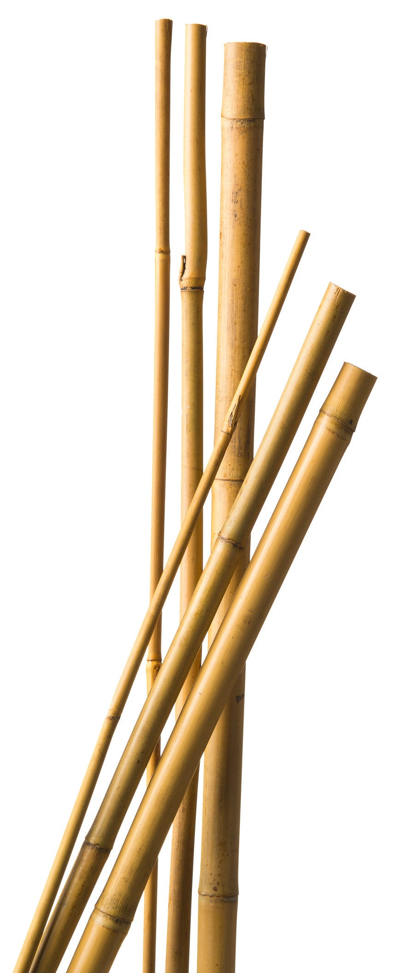 Nature bamboestok h300cm D20-22mm naturel 3 stuks