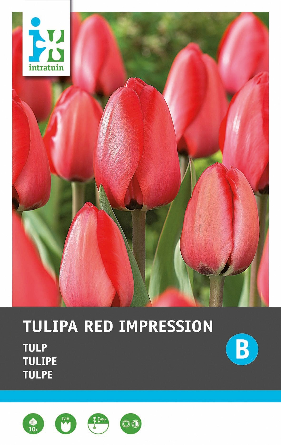 Intratuin bloembollen Tulp (Tulipa 'Red Impression') 10 stuks