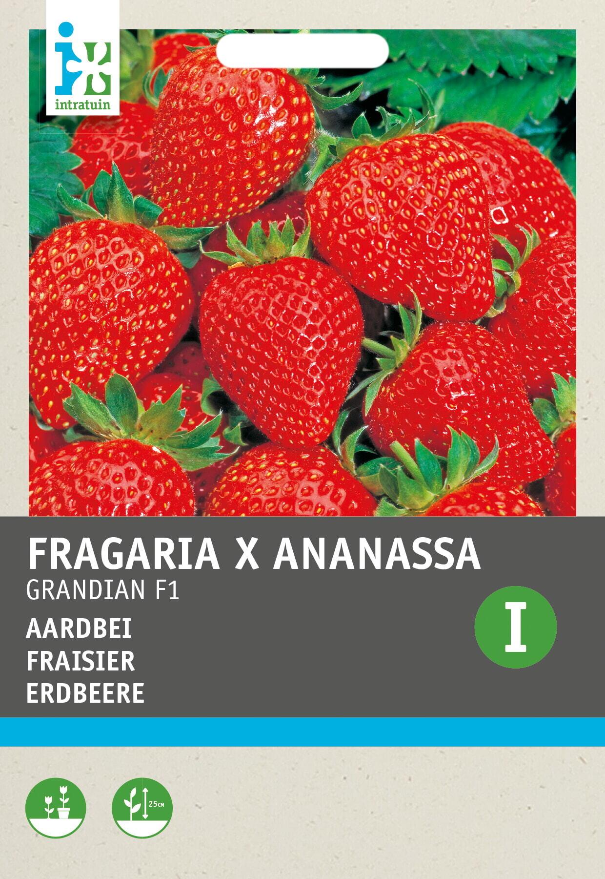 Aardbei (Fragaria - ananassa