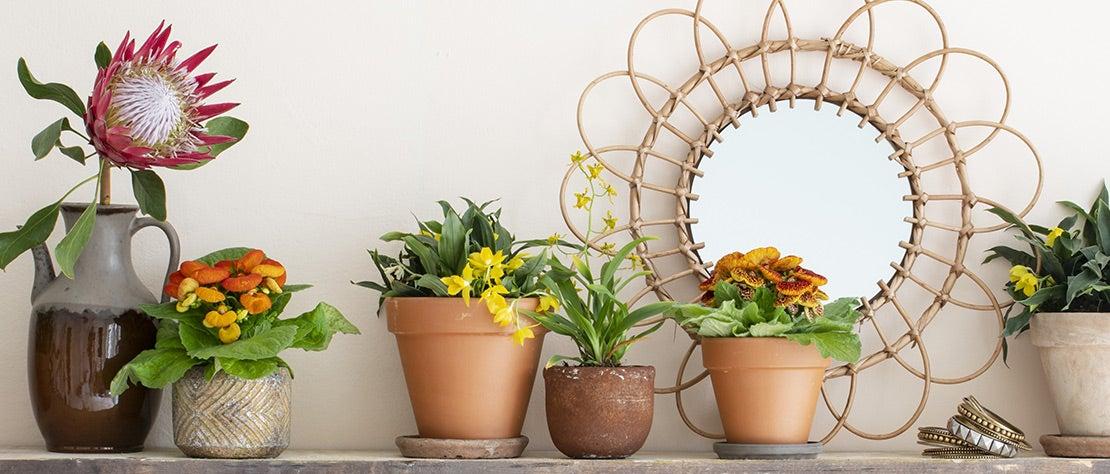 Kamerplantencursus: Bloeiende kamerplanten