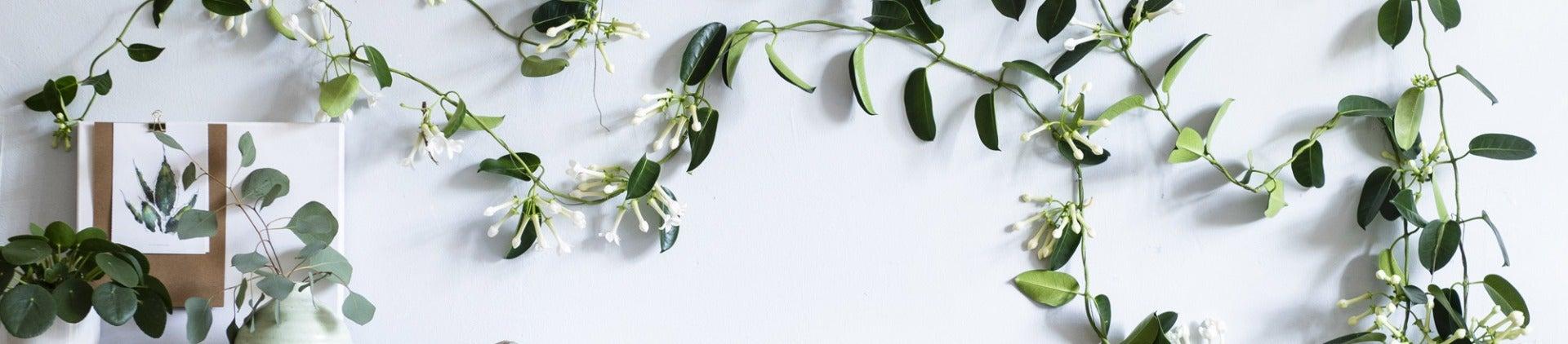 Kamerplantencursus: snoeien en groeien