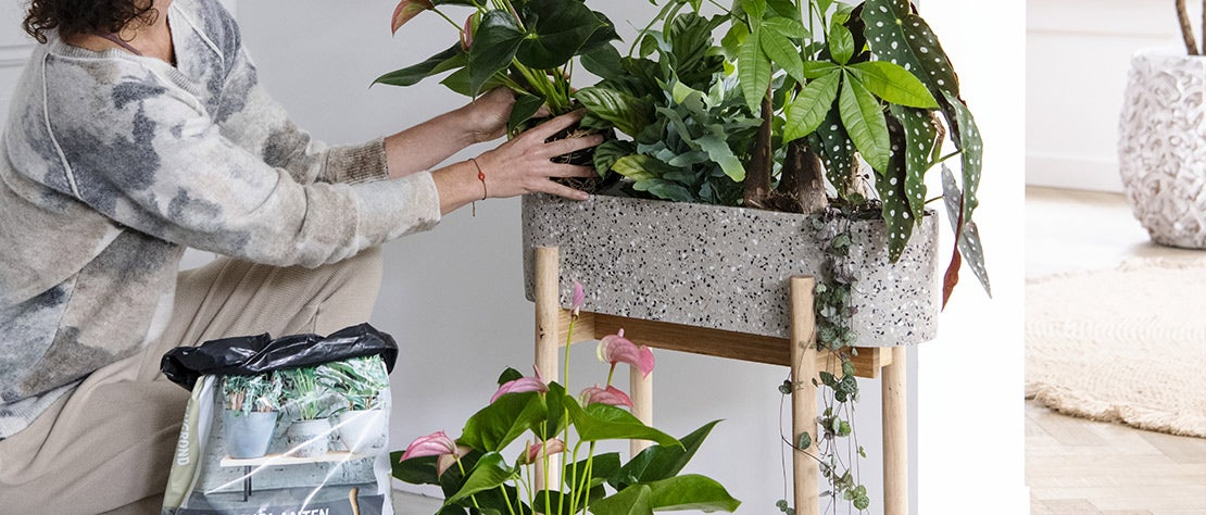 Kamerplantencursus: verpotten