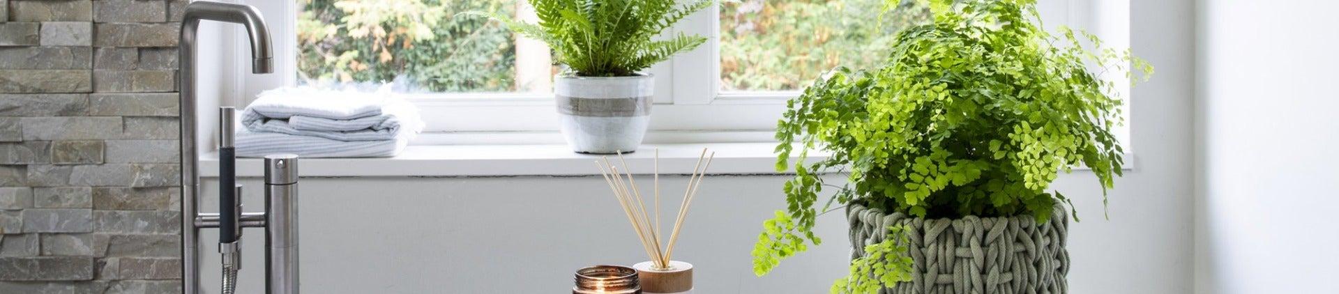 Kamerplantencursus: Kamerplanten in badkamer