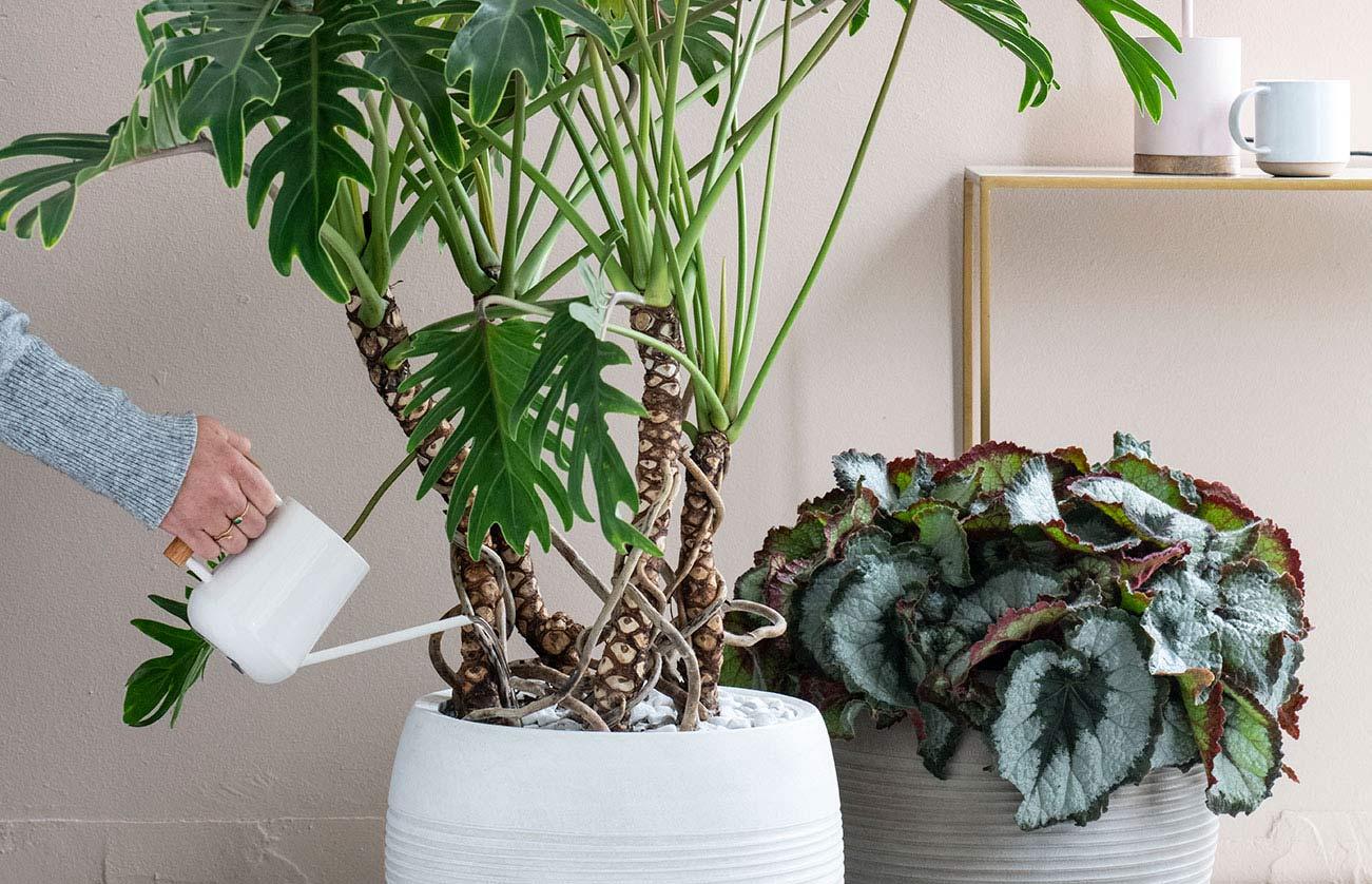 Kamerplanten water geven met gieter