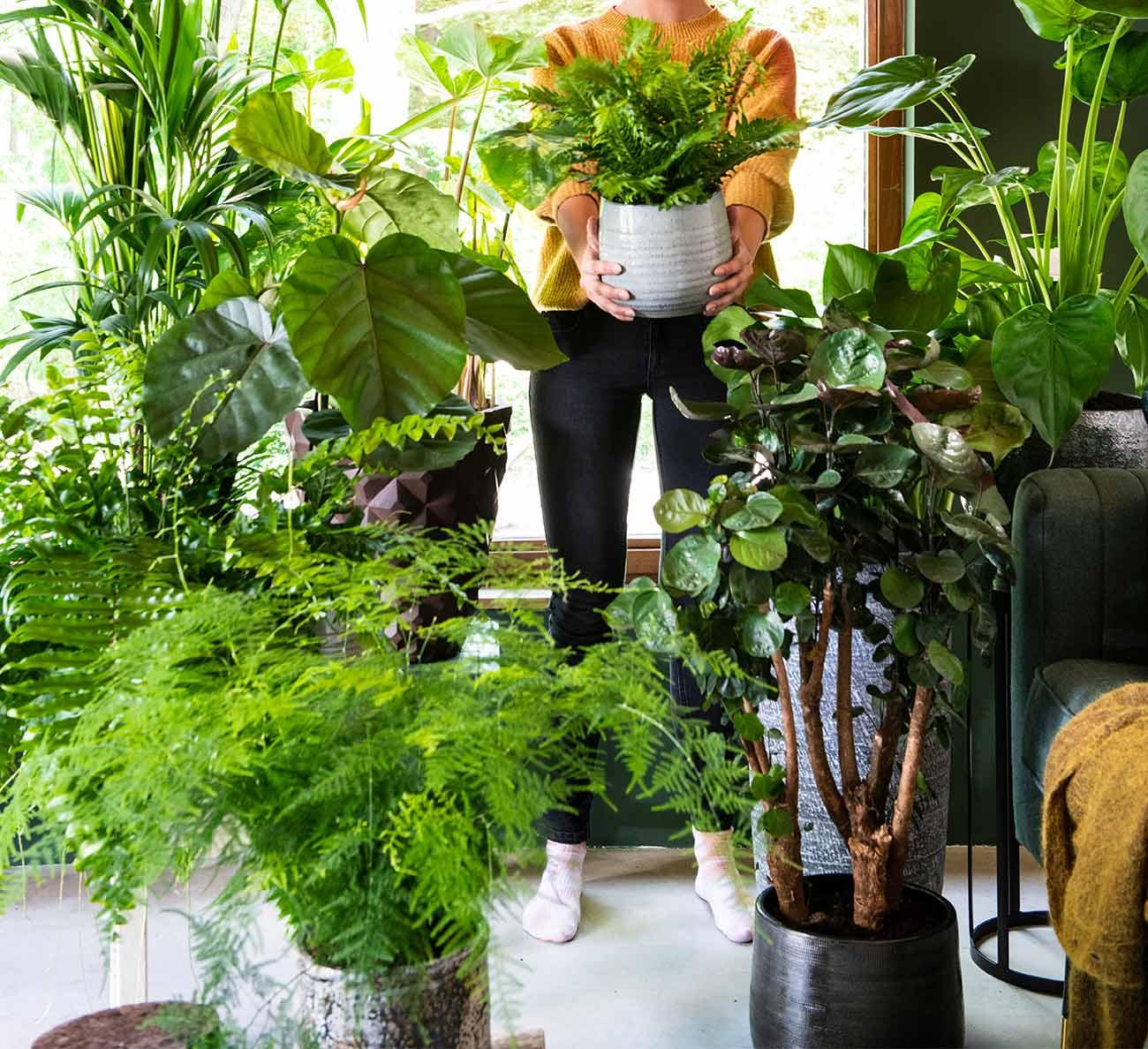 Kamerplanten in de huiskamer