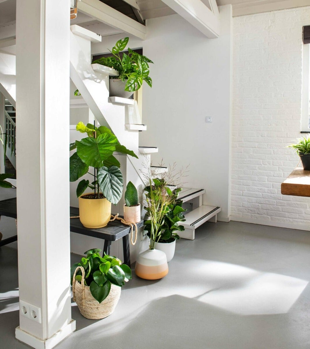 Kamerplanten in huis op de trap
