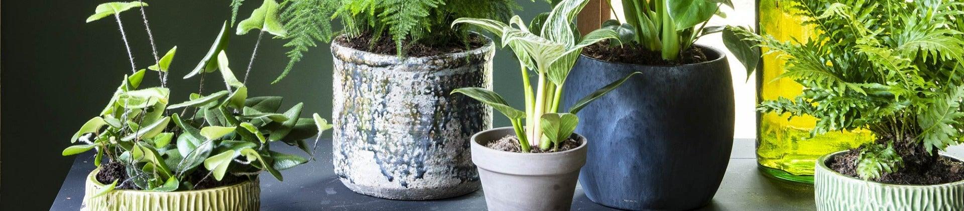 Kamerplantencursus: Kamerplanten in pot