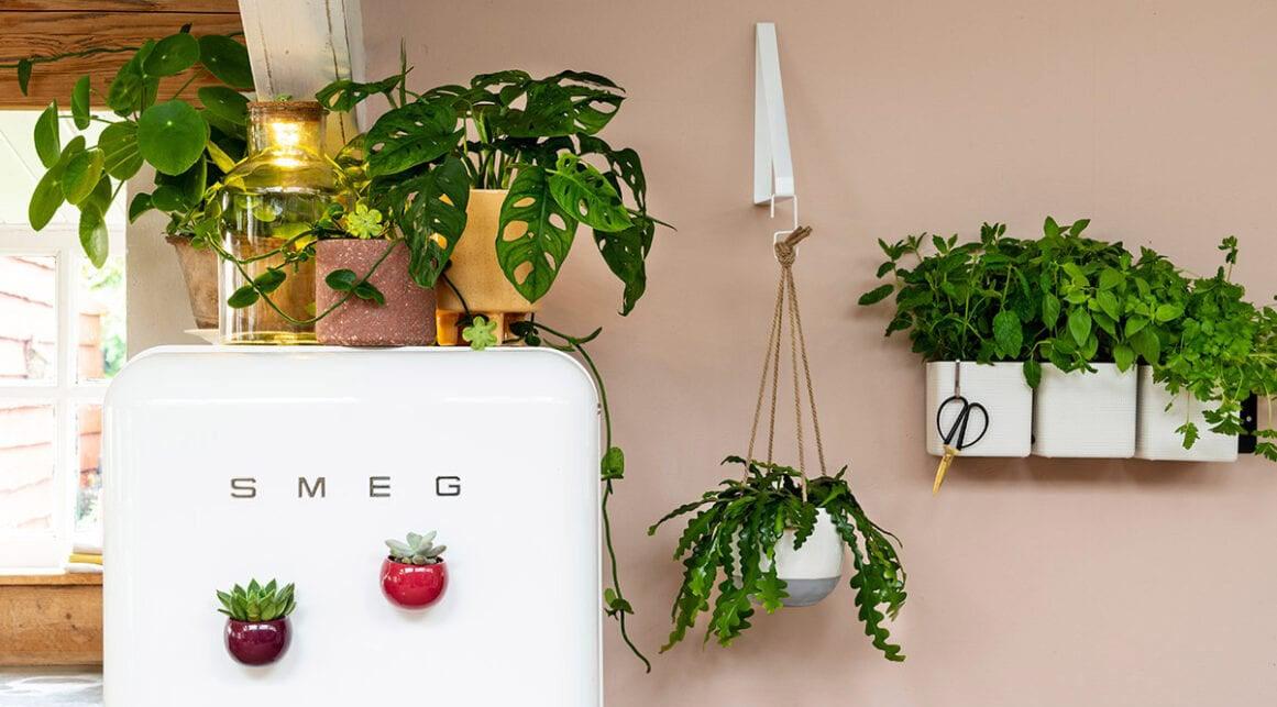 Kamerplanten in keuken, Smeg koelkast