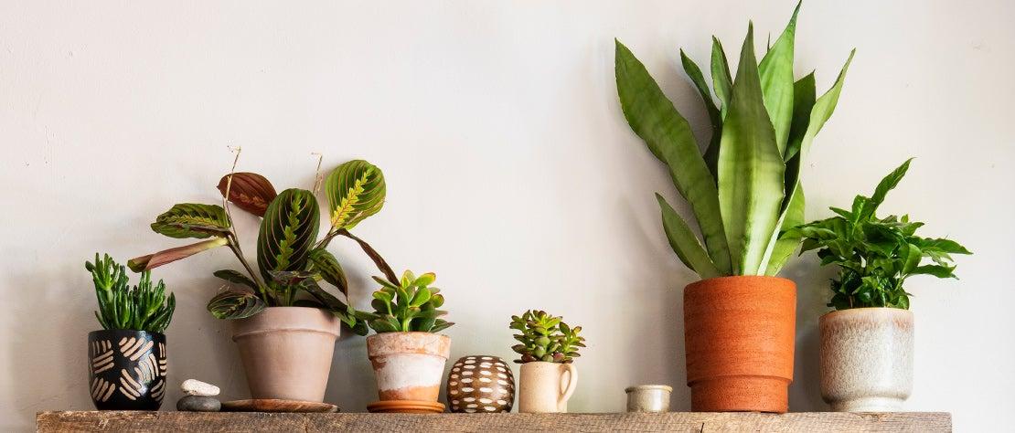 Kamerplantencursus: Verzorging in 4 seizoenen