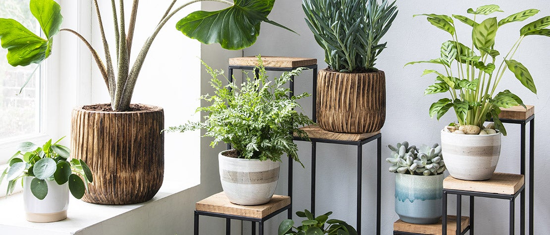 Kamerplantencursus: bloempotten