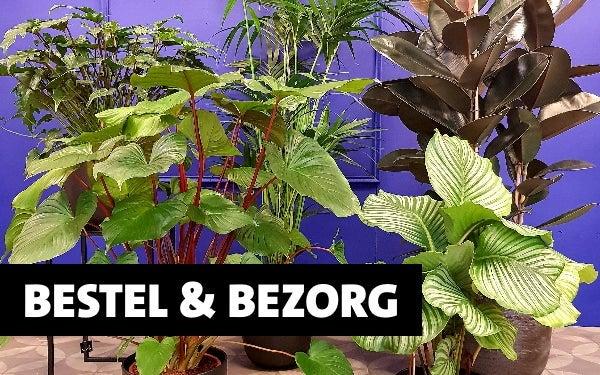 BESTEL & BEZORG