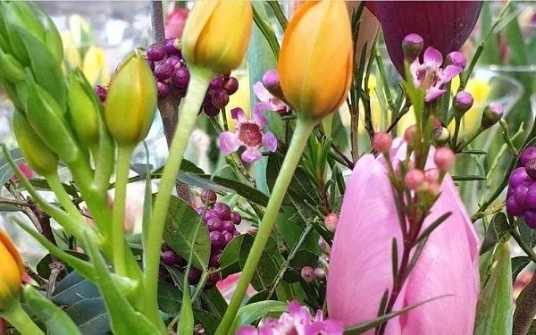 Snijbloemen, perk-  en buitenplanten open, zonder afspraak