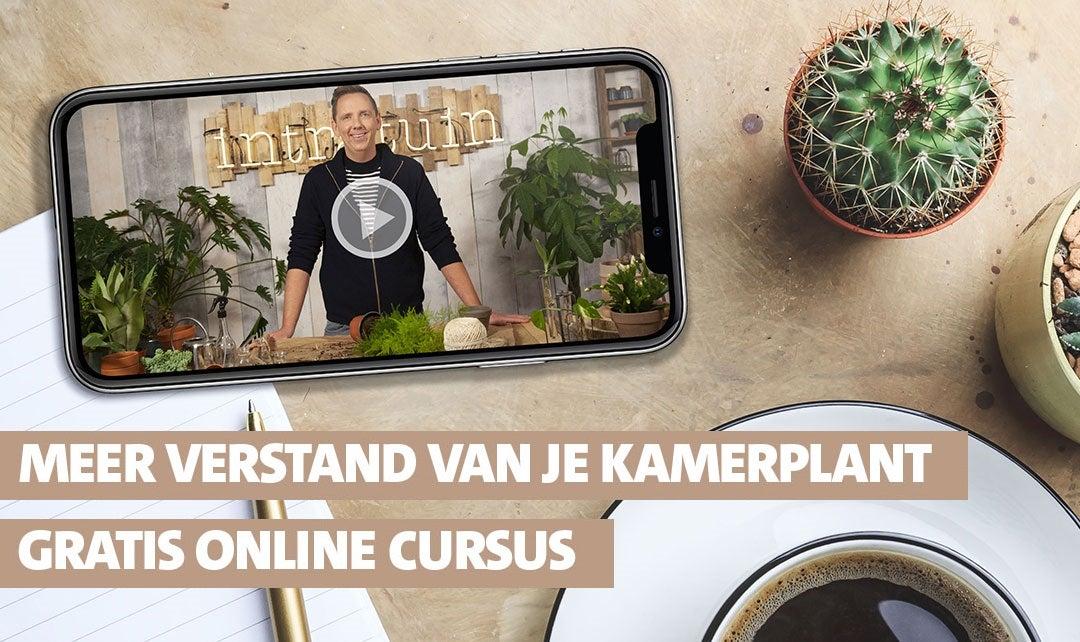 Doe de online plantencursus!