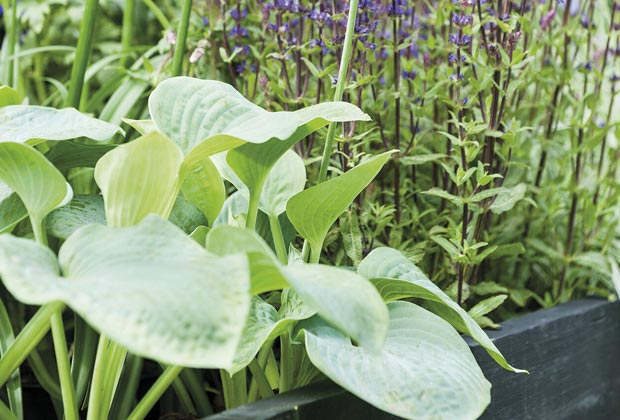 Een border maken met schaduwplanten