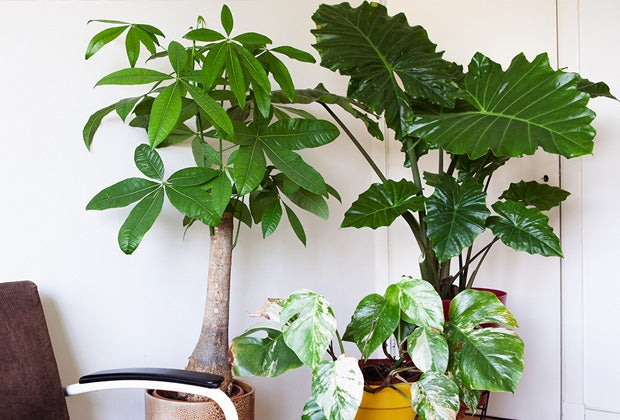 Blog: Alles over grote kamerplanten