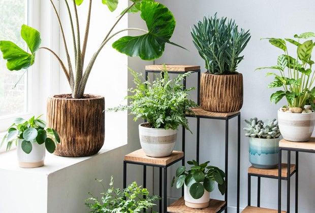 Kamerplanten op elke plek in huis