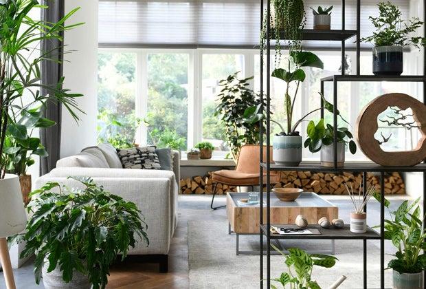 Kamerplanten voor in de woonkamer