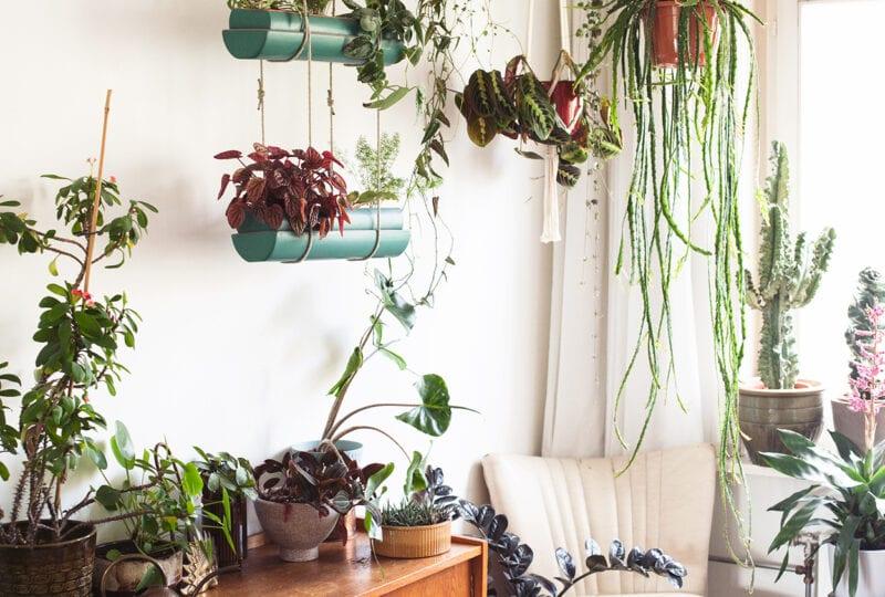 Blog: Zo verzorg je je planten in de zomer