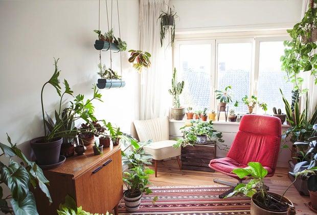 Blog: Kamerplanten verzorgen in de herfst en winter