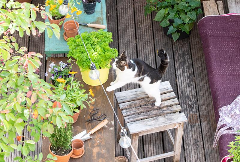 Blog: Een balkon, dakterras of kleine tuin vergroenen