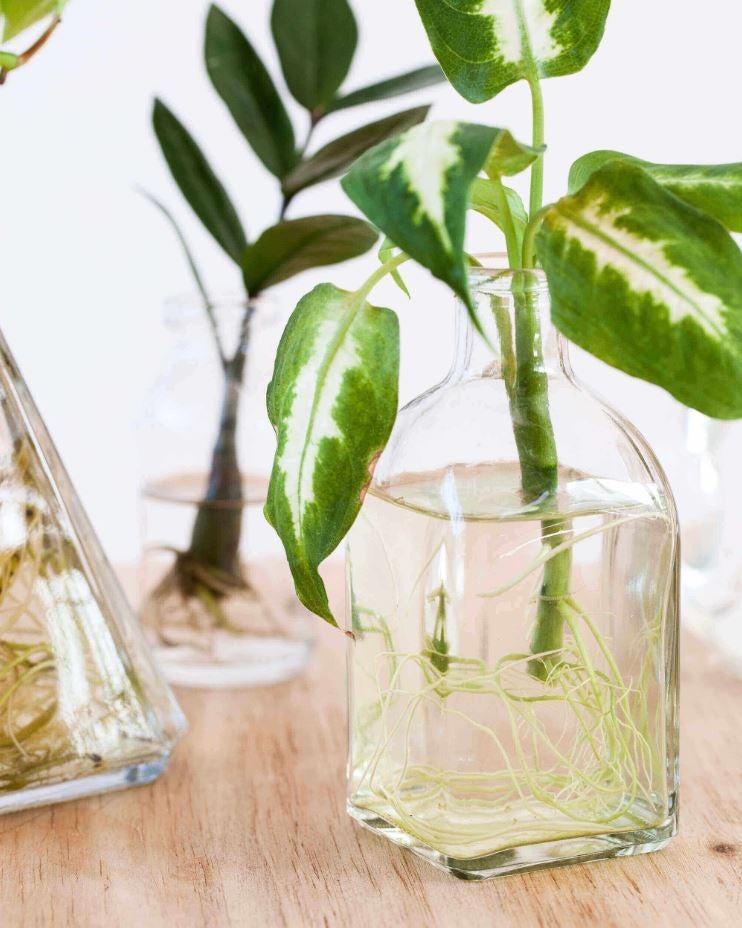 Plantenstekje in water